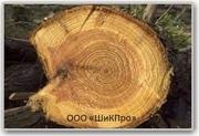 Древесина деловая 1 сорт (кедр.пихта)